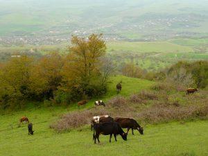 champ dans le Haut-Karabakh