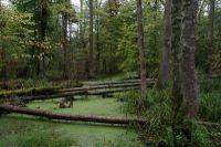 La forêt primaire de Bélovej : un patrimoine transfrontalier