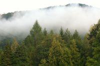 Forêt en Roumanie