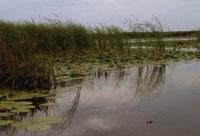 Delta du Danube : quelle biodiversité?