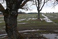 La Lettonie refuse la culture des OGM