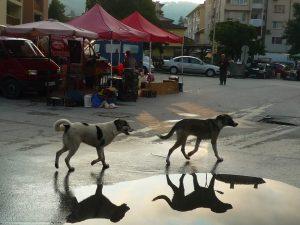 La Bulgarie face à la prolifération des chiens errants