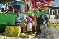 Les mutations du secteur de la pêche en Poméranie occidentale (Pologne) depuis les années 1990